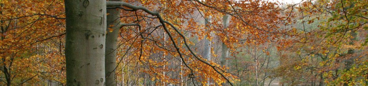 Westmorland Woodfuel